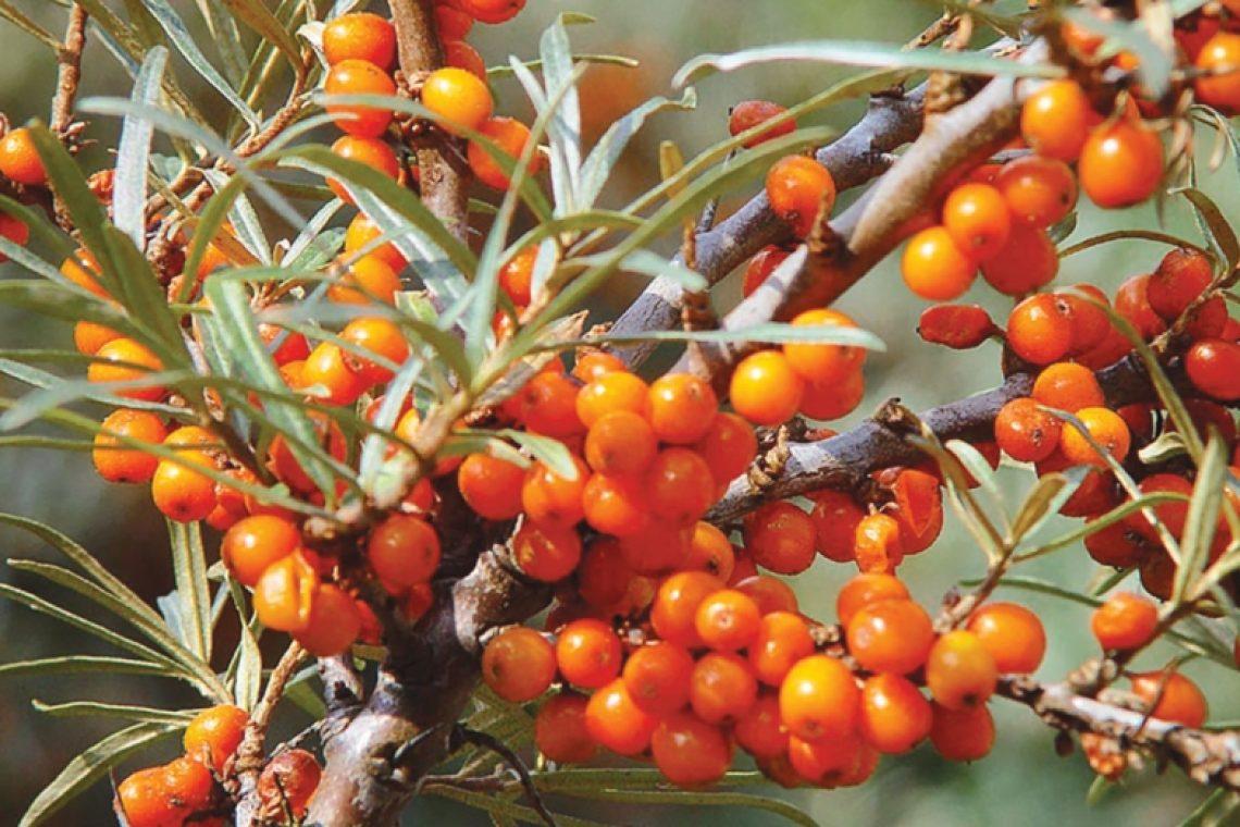 Orange valley cătină sirop produse naturale vitamine miere